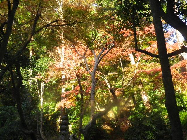 09)  15.12.12 鎌倉「妙本寺」紅葉の最盛期