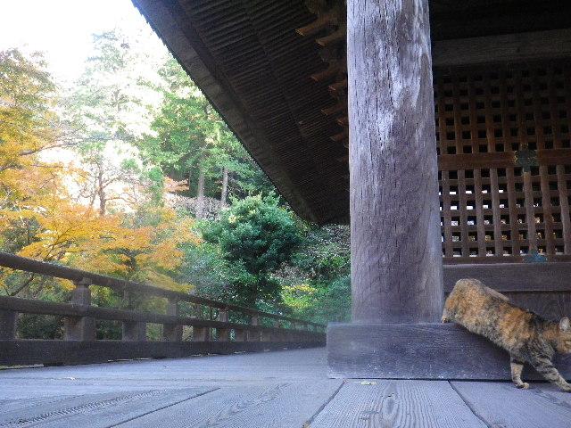 11-4)  15.12.12 鎌倉「妙本寺」紅葉の最盛期