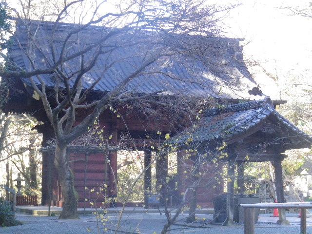 07-1)   16.01.25 消防訓練日だった、鎌倉「妙本寺」の梅。