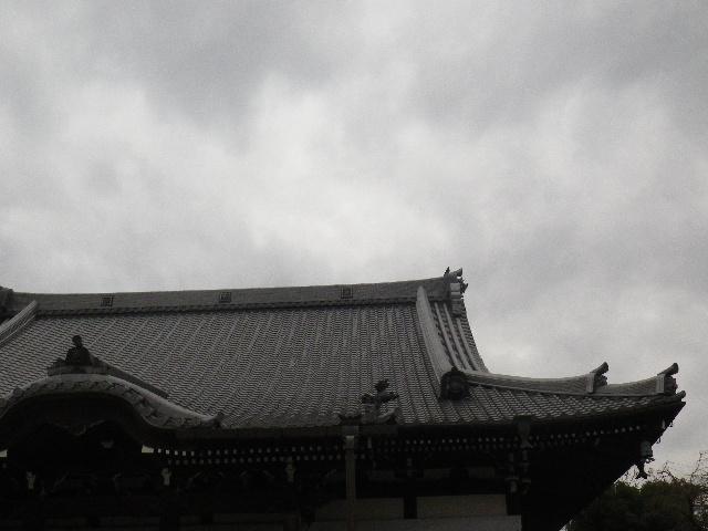 01-2) 16.02.24 本堂改修の足場を解かれた 鎌倉「本覚寺」、祝うように咲く梅と河津桜。
