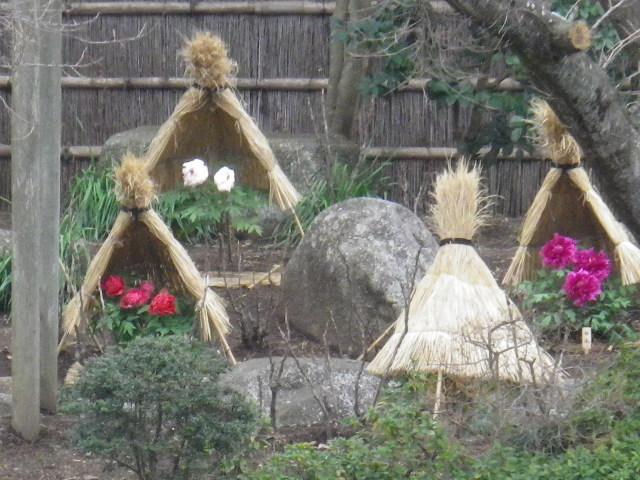 01-3) ' ぼたん園 '  _  16.02.24 雪が降りそうな日、立春を大きく過ぎたことに気づいた 鎌倉「鶴岡八幡宮」。