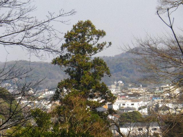 14-3) 16.03.04 鎌倉「光則寺」梅が咲く頃