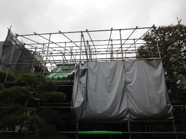 02) 本堂修復中  _ 16.03.12 鎌倉「大巧寺」種類豊富な椿が咲き揃い始める頃