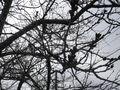 01-2)   16.03.16 三月最終週が開花かナ?逗子ハイランドの桜