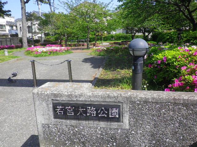 """01)   16.04.26 鎌倉 """" 若宮大路公園 """" 低木のツツジが咲き揃う頃"""