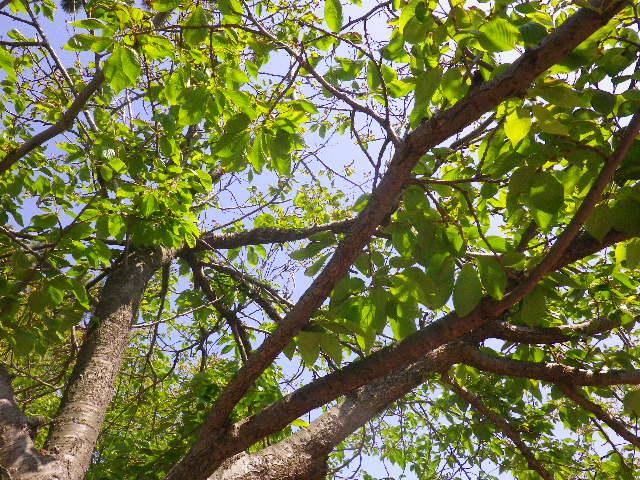 """07)   16.04.26 鎌倉 """" 若宮大路公園 """" 低木のツツジが咲き揃う頃"""