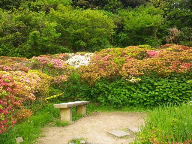 04) 16.04.27 葉山「花の木公園」のツツジを観に行った!・・・ ・・・ ・・・ ・・・のだけれども、遥か前に咲き終わって ' 花殻の絨毯 ' ?だった。 アワワワワ 嗚呼