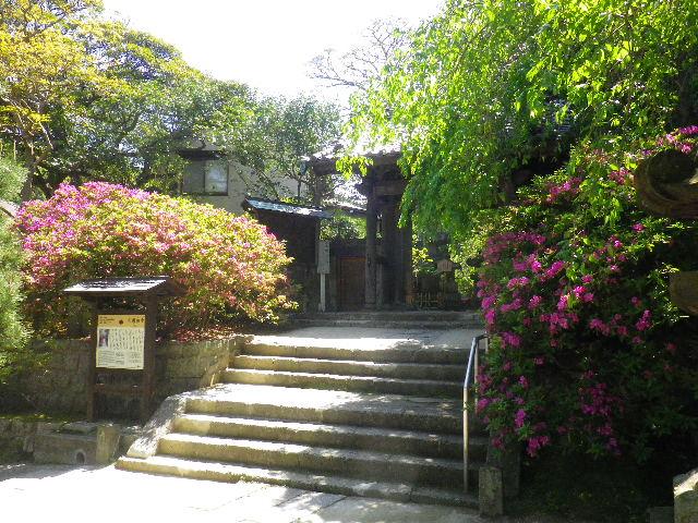 01-1)   _ 16.04.30 晩春の・・・というよりも、立夏直前というべき緑が濃い  鎌倉「安国論寺」。
