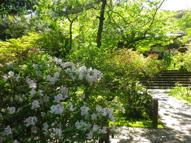 02)  _ 16.04.30 晩春の・・・というよりも、立夏直前というべき緑が濃い  鎌倉「安国論寺」。