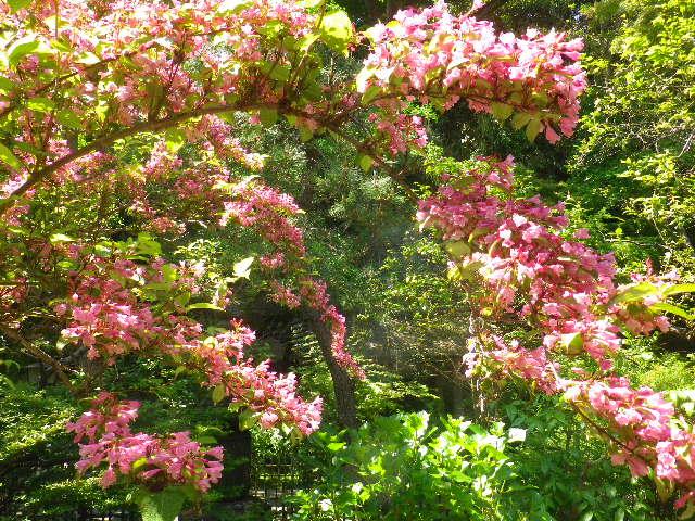 11-2)  _ 16.04.30 晩春の・・・というよりも、立夏直前というべき緑が濃い  鎌倉「安国論寺」。
