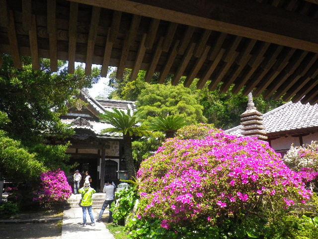 03)   _ 16.04.30 鎌倉「安養院」桃色に染まる頃