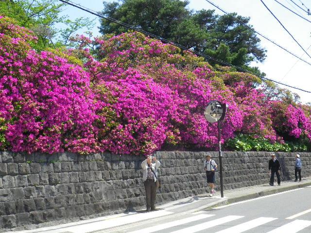 06)   _ 16.04.30 鎌倉「安養院」桃色に染まる頃
