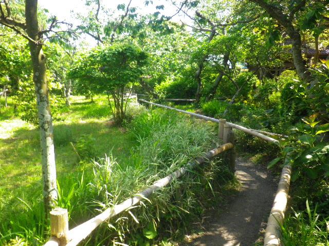 04-2)  _ 16.05.05 白藤に蜜蜂が集う時期の、鎌倉「英勝寺」。