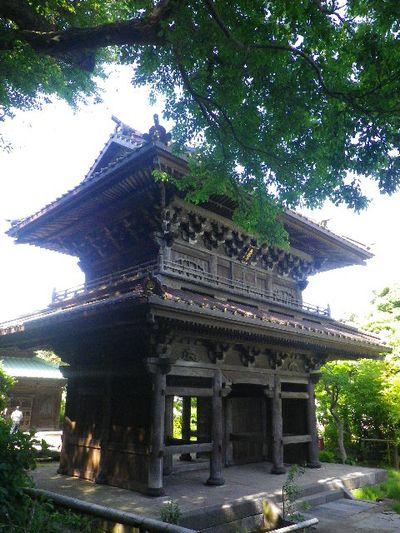 06-1)  _ 16.05.05 白藤に蜜蜂が集う時期の、鎌倉「英勝寺」。