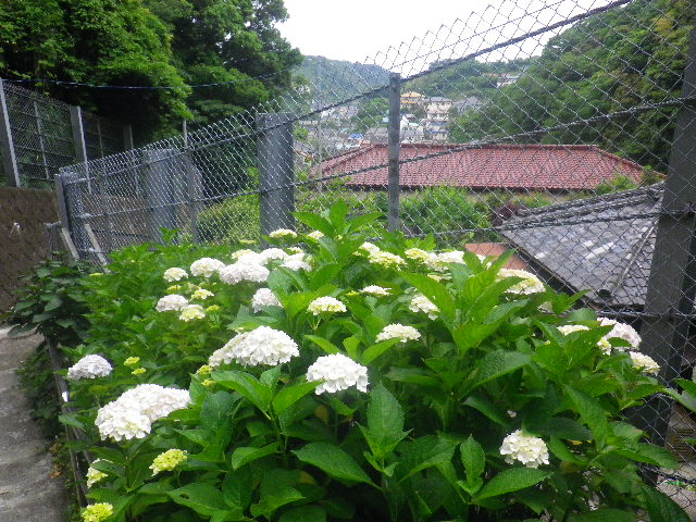 01)   16.05.26 近所で撮った写真を二枚だけ