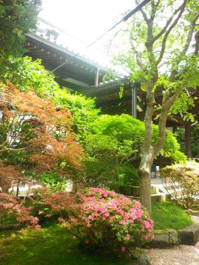 02) 本堂周辺 _ 16.06.04 鎌倉「妙本寺」西洋紫陽花よりも先に、ヤマアジサイ/ガクアジサイが見頃の日。