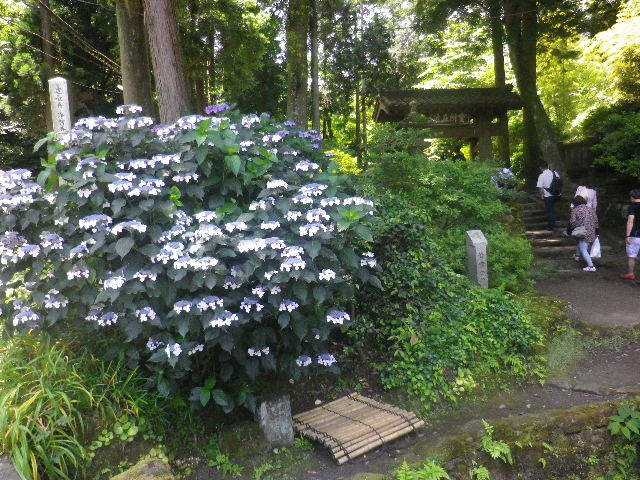 01-1) _ 16.06.11 暦での入梅翌日の 鎌倉「浄智寺」