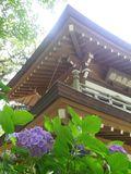 05-3) _ 16.06.11 暦での入梅翌日の 鎌倉「浄智寺」