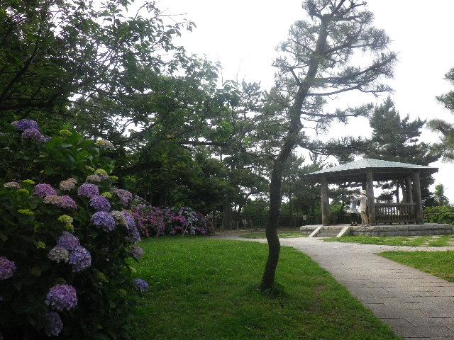 E01) 公園の一番高い場所の広場 _ 16.06.19  紫陽花が咲く 「鎌倉海浜公園稲村ガ崎地区」 の朝