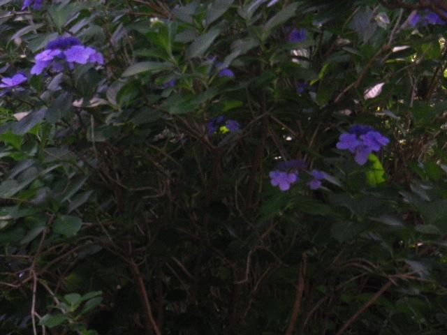 C03-2)   16.06.27 鎌倉「長勝寺」今年一年の折り返しに差し掛かる頃