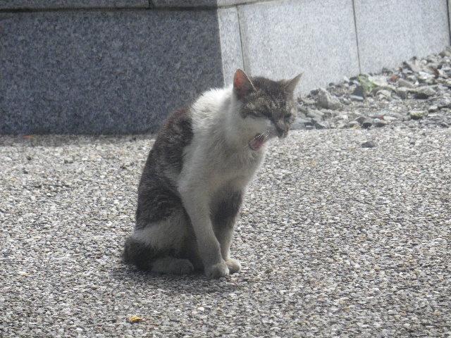 01-1) ' 竹田和夫 '(本名 ' チビクロ ' ) 18歳。 もう19歳になっているかもしれない。 _ 06.06.17 アソコの アレ