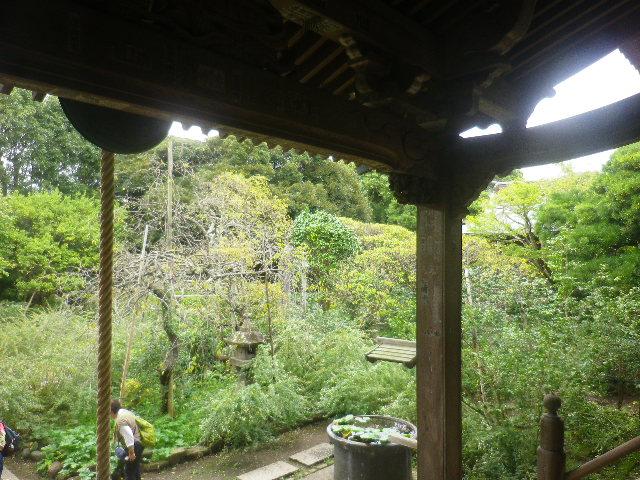 05) _ 16.09.29 鎌倉「宝戒寺」 ' 萩の寺 ' とも呼ばれるが、今年の花は台風に甚振られた。