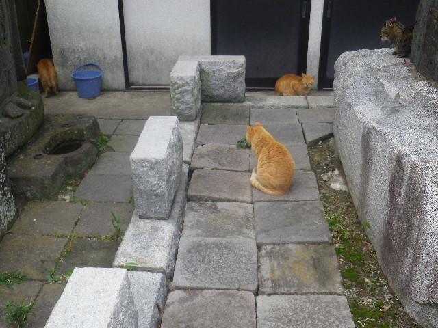 12)   左: ' 梶井基次郎 '(本名 ' レモン ' )、中: ' ジュディ・ダイブル '(本名  ' ブータロー '  ) & 右: ' クリッシー・ハインド ' (本名 ' キートン '   )。 石碑台座