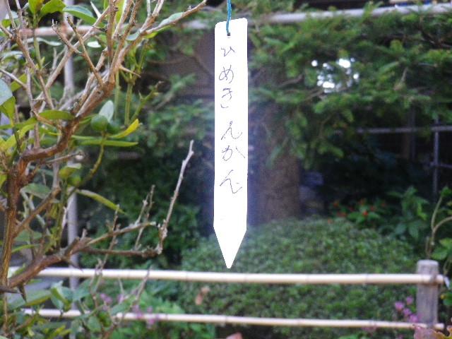05-1) ひめきんかん _ 16.11.05 鎌倉「大巧寺」 立冬直前の境内