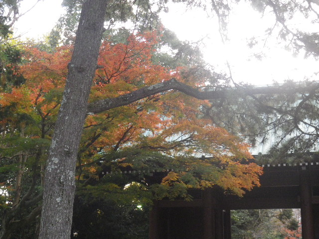 01-4)   16.11.26 鎌倉「高徳院」紅葉の頃  門扉のそとから大仏さまのご尊顔を拝した