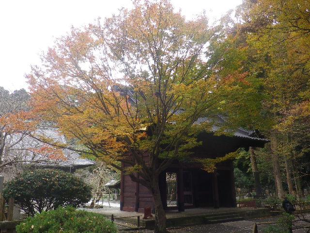 02-1)   16.11.28 初冬の 鎌倉「妙本寺」