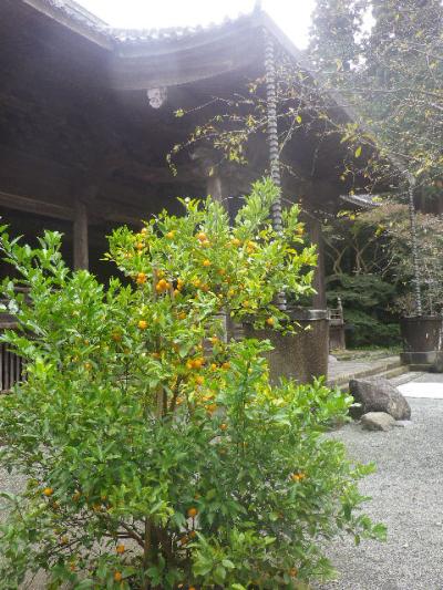 04-1)   16.11.28 初冬の 鎌倉「妙本寺」
