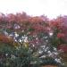 IMGP0005 _ 16.11.26 鎌倉山「扇湖山荘」公開を観覧した