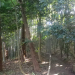 IMGP0016 _ 16.11.26 鎌倉山「扇湖山荘」公開を観覧した