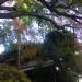 IMGP0020 _ 16.11.26 鎌倉山「扇湖山荘」公開を観覧した
