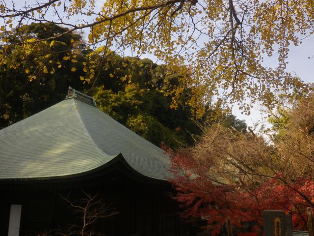 2-02)  16.11.30 初冬の 鎌倉「長勝寺」