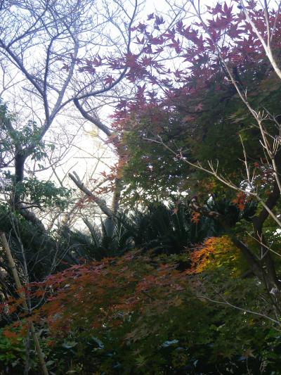 4-02)  16.11.30 初冬の 鎌倉「長勝寺」
