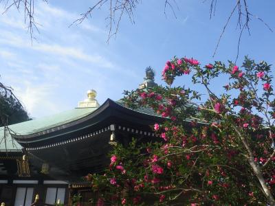 06-1)  16.11.30 初冬の 鎌倉「長勝寺」
