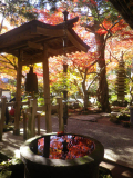 05-3a)   16.12.02 初冬の 鎌倉「覚園寺」