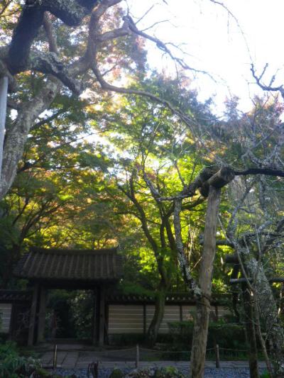 05-1)   16.12.02 初冬の 鎌倉「瑞泉寺」