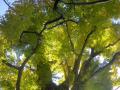 02-2) 16.12.02 初冬の 鎌倉「荏柄天神社」