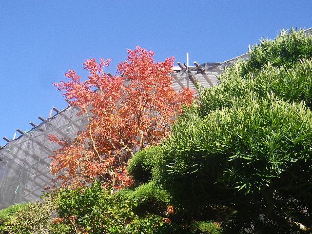 02-1)   16.12.02 鎌倉「大巧寺」 初冬の紅葉と黄葉