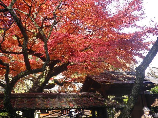 04-1)   16.12.05 初冬の 鎌倉「東慶寺」