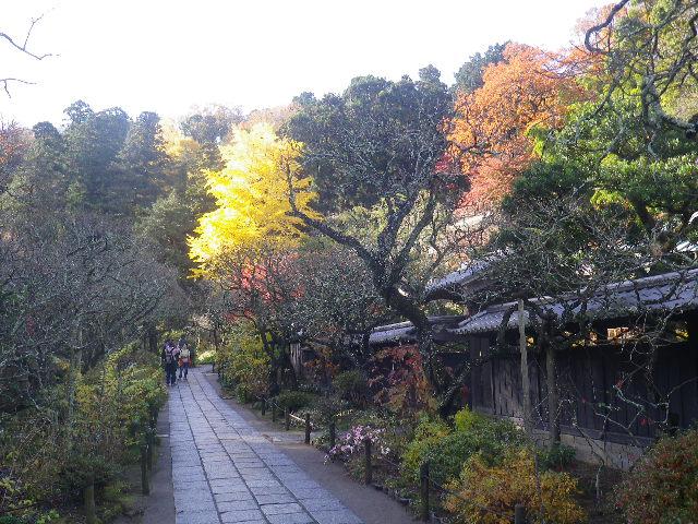 05-1)   16.12.05 初冬の 鎌倉「東慶寺」