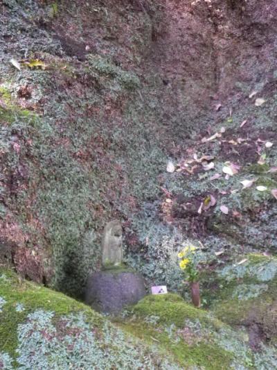 08)   こちらも、夏まで お預けの ' イワタバコ '。 _ 16.12.05 初冬の 鎌倉「東慶寺」