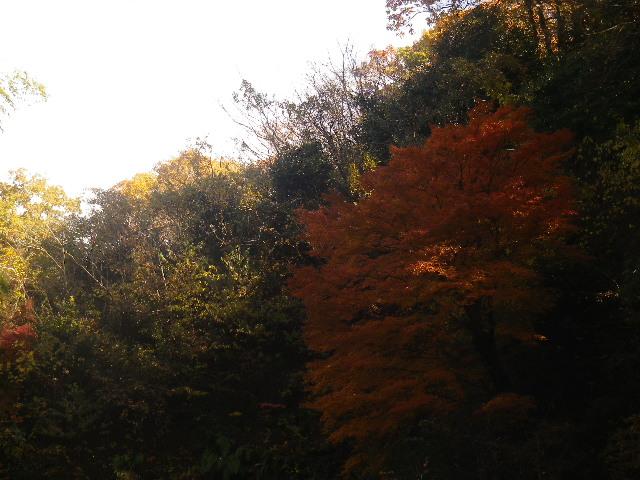 10-06)   16.12.05 初冬の 鎌倉「東慶寺」