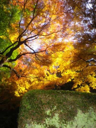 10-07) 他所で何度も書いてきた写真が趣味ではない私が あざとい構図!で 墓所を囲う塀の苔生す緑と対比させたつもりだったが ・・・ ・・・ ・・・ ・・・ 逆光の影で苔が見えぬまま