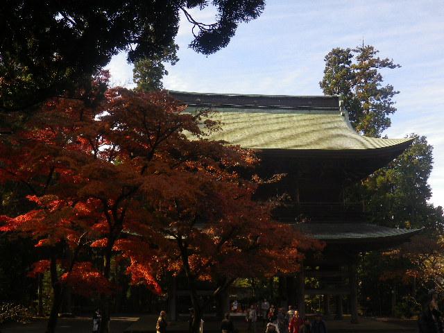 B01-3)  16.12.05 初冬の 鎌倉「円覚寺」