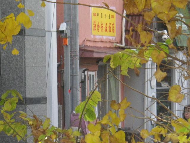 """01-2)   _ 16.12.05 鎌倉 """" 若宮大路 """" 沿いのの銀杏を、そぞろ歩きしながら """" 段葛 """" から眺めた。"""