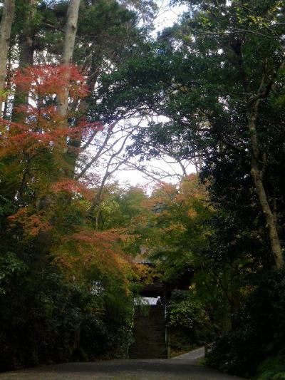 01)    16.12.15 鎌倉「妙本寺」 冬至を迎えようとする頃
