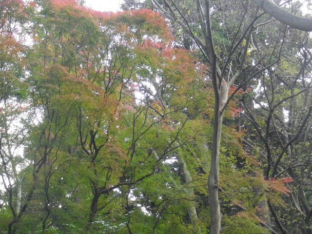01-2)   16.12.15 鎌倉「妙本寺」 冬至を迎えようとする頃